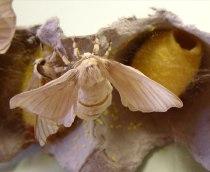 silkworms24a