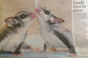 Deadly thirst for gliders