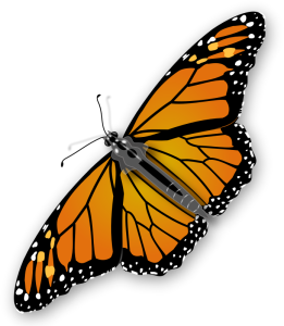jimmiet, A colourful monarch butterfly   https://openclipart.org/detail/19002/monarch-butterfly