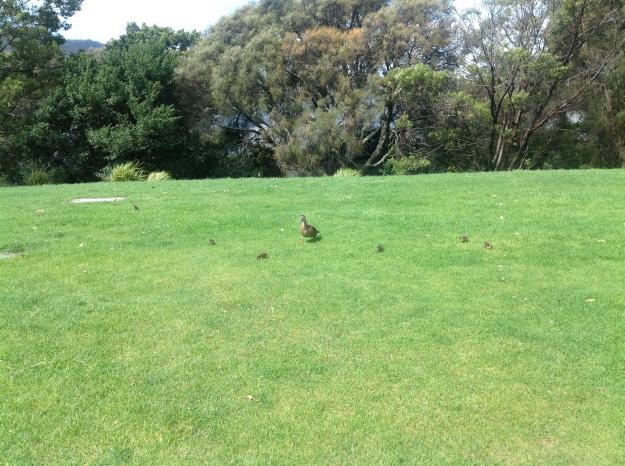 Springtime in Tasmania 2014