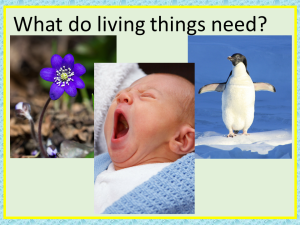 what do living things need