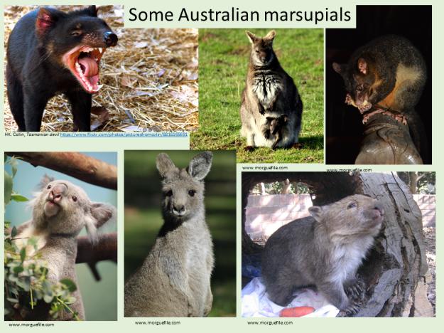 feeling-prickly-marsupials