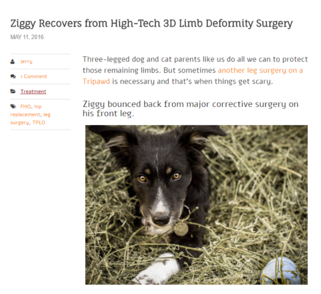 ziggy-on-tripawds-blog