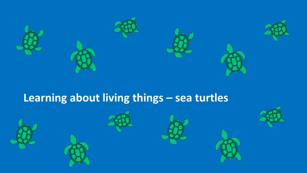 living things sea turtles