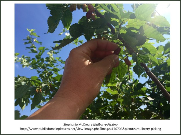 Mulberry picking