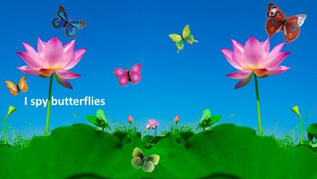 I spy butterflies