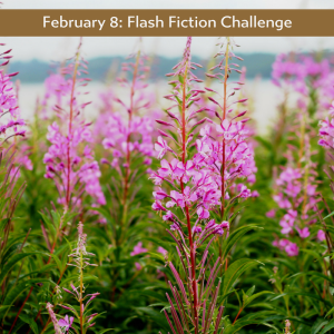 fireweed Charli Mills Carrot Ranch flash fiction