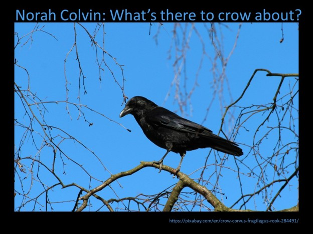 crows ravens bullying and kindness