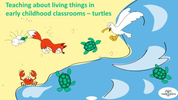teaching about sea turtles in science curriculum in early childhood classrooms from P-2