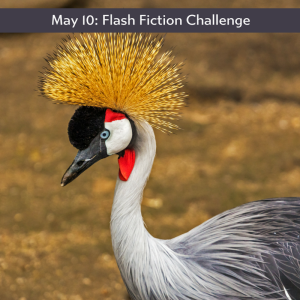 crowned crane as part of the Carrot Ranch flash fiction challenge