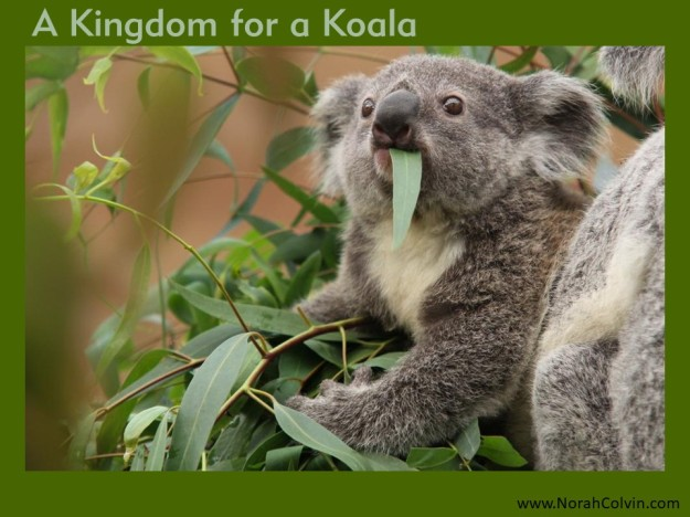 A Kingdom for a Koala flash fiction