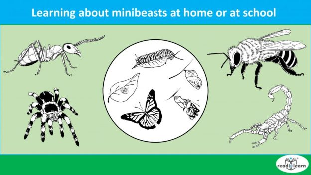 learning about minibeasts at home or at school